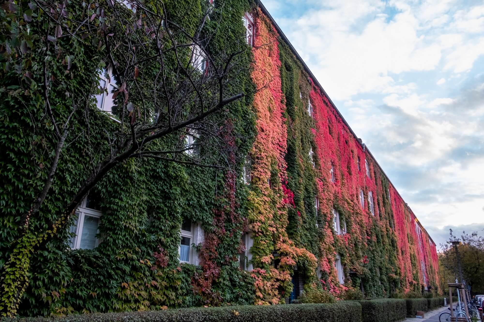 Gebäudebegrünung im geförderten Wohnungsbau